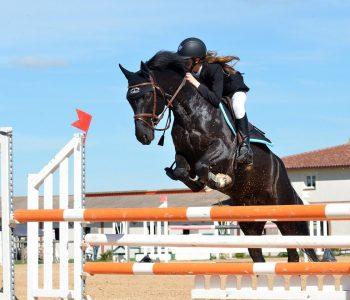 équitation, un sport en E