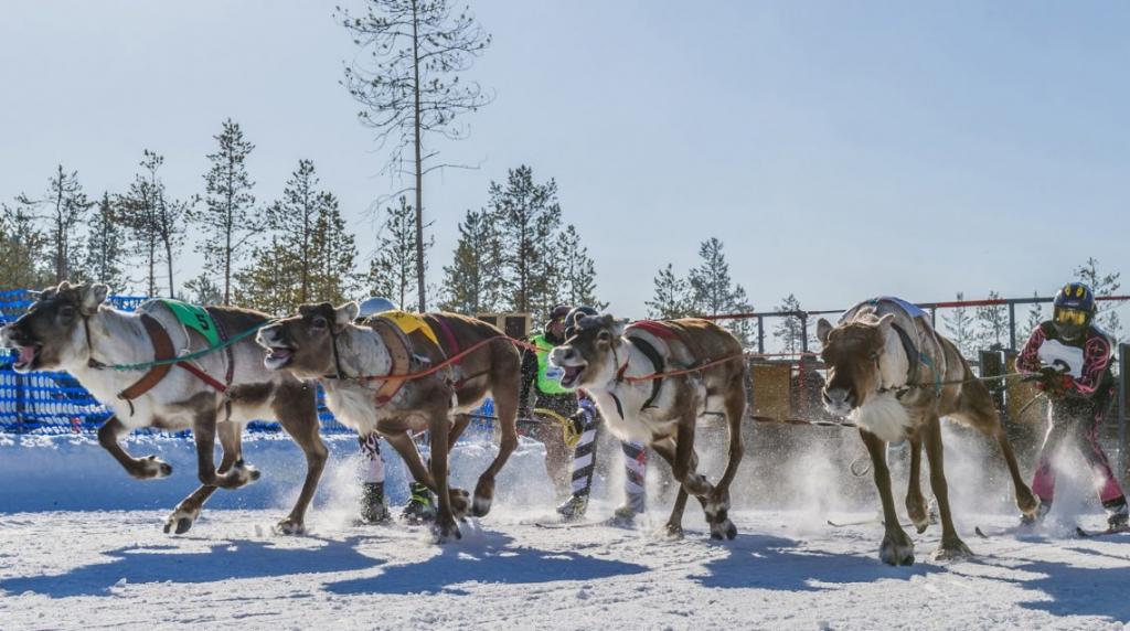 courses de rennes
